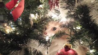Crying kitty regrets climbing Christmas tree - Video