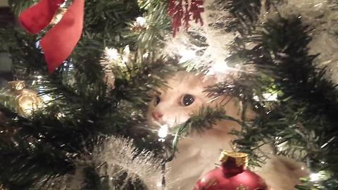 Crying kitty regrets climbing Christmas tree