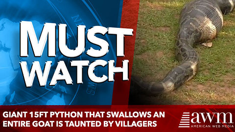 Giant 15ft python that swallows an entire GOAT is taunted by villagers