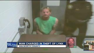 Man charged in theft of lynx in Walworth County - Video