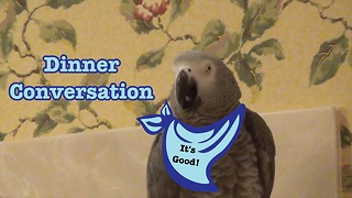Humorous dinner conversation with Einstein the Parrot - Video