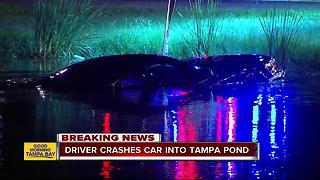 Driver crashes into pond off Courtney Campbell Causeway after another vehicle cut him off - Video