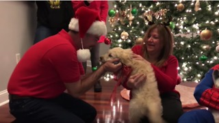 Dad gets surprise puppy for Christmas - Video