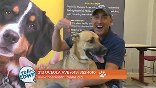 Nashville Humane Association Pet of the Week 7-14-17 - Video