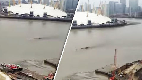Thames River Monster Sighting-What Was The Creature In The River?
