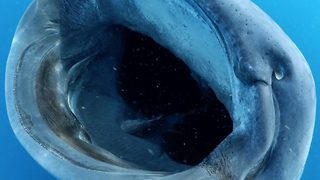 Photographer captures 'jaws'-dropping footage of sharks opening wide for lunch time
