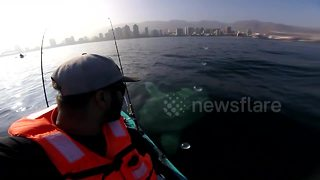 Kayaker has close encounter with massive moonfish - Video