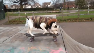 Watching a Dog Skateboarding Will Never Get Old - Video