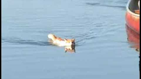 This Cat is a Better Swimmer Than You