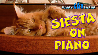 Funny Cat BYRON ❤️ Cats Siesta on piano