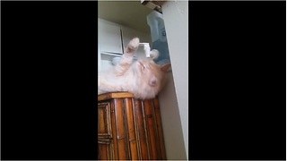 Genius cat drinks casually from water cooler - Video