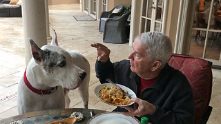 Max the Deaf Great Dane Speaks at The Table  - Video