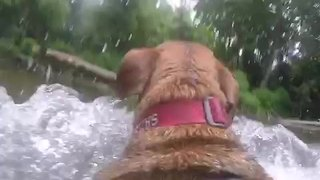 GoPro perspective: Dog fetches stick from river