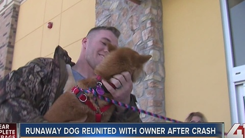 CO family reunited with dog in KC after wreck