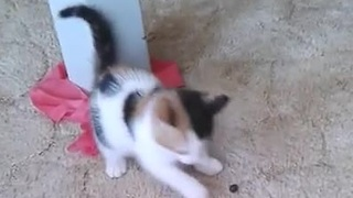 Adorable kitten doesn't trust blueberry