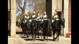 Royal Horses Get Health Check - Video