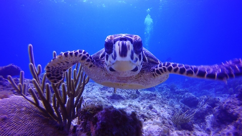 Check Out The Magical And Mysterious World Beneath The Waves In The Cayman Islands
