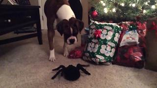"""Cute Dog Afraid Of Spider Toy"""