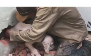 Rescuers Use Hammer to Free Puppy Trapped Between Two Brick Walls - Video
