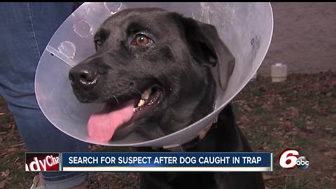 Officials looking for person responsible after dog caught in coyote trap in Hancock County