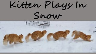 Cutest Kitten Plays With Snow  - Video