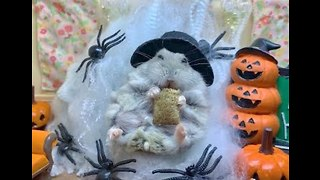 Hungry Hamster Is Ready for Halloween