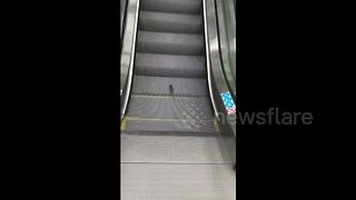 Rat uses escalator as treadmill - Video