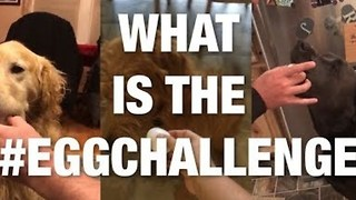 Introducing The New Challenge Called 'Egg Challenge'  - Video