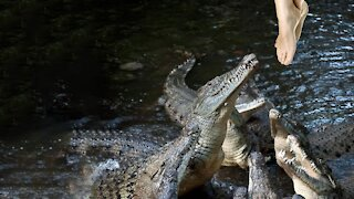 How to Survive a Crocodile Attack