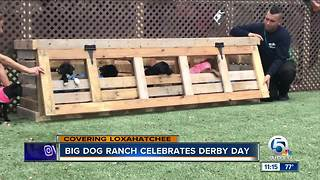 Big Dog Ranch Rescue celebrates derby day in their own way - Video