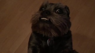 This Dog Really Loves His Treats - Video