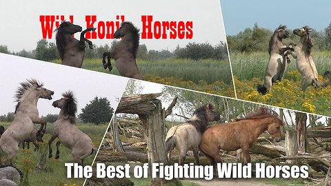 The best compilation of fighting wild horses ever!