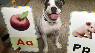 Smart dog is picture card pro spotting the apple every time - Video
