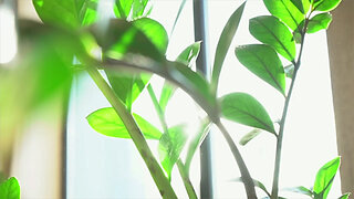 5 tips to keep your plants happy when you're away