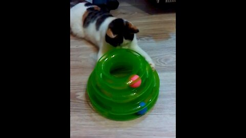 What a fun toy for my cat