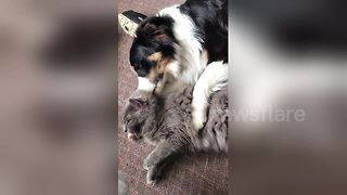 Too cute! Cat and dog can't stop cuddling - Video