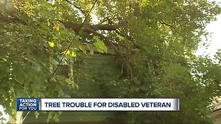 Tree troubles for disabled veteran - Video
