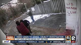 Video of cat being assaulted set on fire leads to animal cruelty investigation - Video