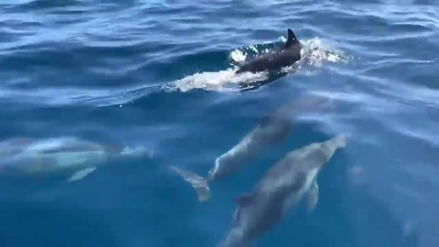'Megapod' of thousands of dolphins off the coast of San Diego
