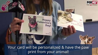 Make Valentines Day Special With the Capital Area Humane Society