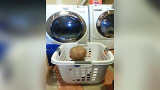 Baby Pretends to be Laundry