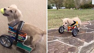 Rescue pup gifted a wheelchair made of LEGOS