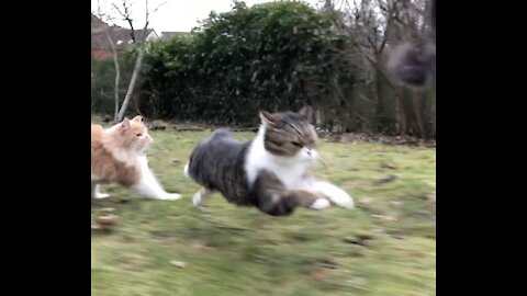 Epic running cat action