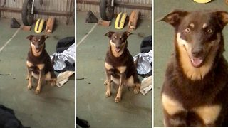 This dog is probably a better poser than you - Video