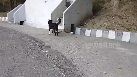 Cheeky dog tries to pick a fight with wild monkey