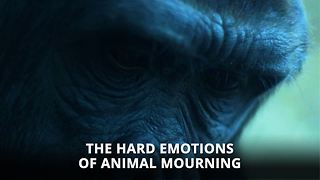 Animals actually get depressed, and death is to blame - Video