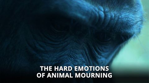 Animals actually get depressed, and death is to blame