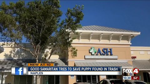 Puppy found in trash at a Naples apartment complex