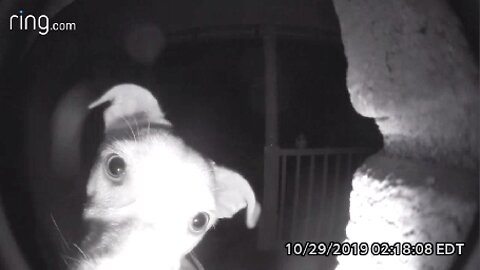 DOG WAKES UP HOUSEHOLD AT 2AM BY RINGING DOORBELL AFTER ACCIDENTALLY BEING LOCKED OUTSIDE OF HOME