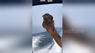 Adorable puppy on a boat moves his paws in swimming motion - Video